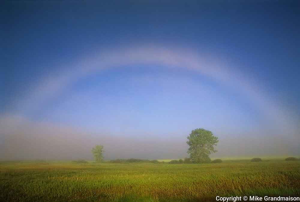 Fogbow or white rainbow with tree<br />Bourget<br />Ontario<br />Canada