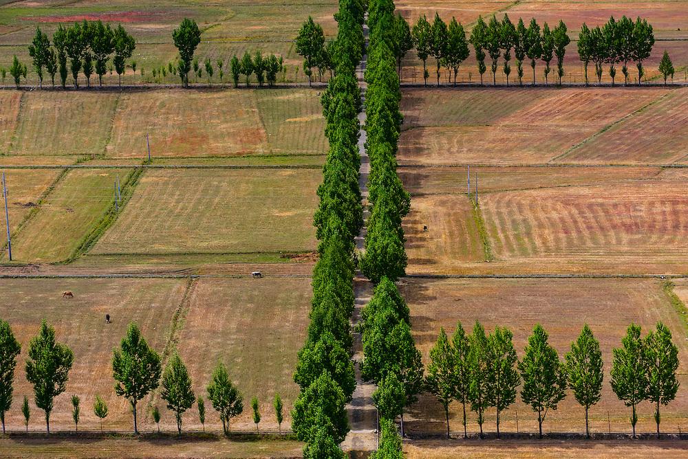Tree lined roads, Nedong, Lhoka (Shannan) Prefecture, Tibet, China.