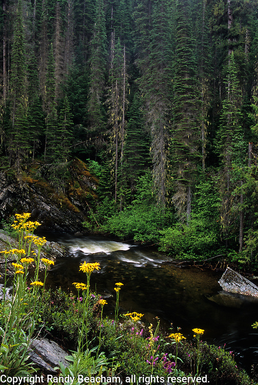 Wildflowers along the West Fork Yaak River. Yaak Valley, northwest Montana