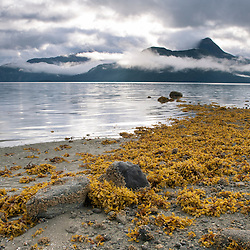 Seaweed colors the beach during low tide in Geikie Inlet in Glacier Bay National Park, Alaska