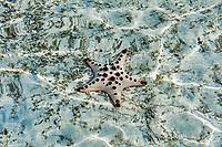 Starfish in Palawan Philippines