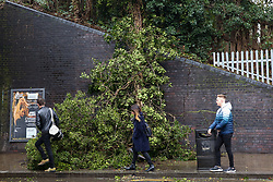 © Licensed to London News Pictures. 09/02/2020. London, UK. A tree has fallen down under the bridge in Green Lanes, Haringey, north London, blocking the pavement. Storm Ciara reaches London with heavy rain and strong winds. Photo credit: Dinendra Haria/LNP