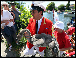 Image licensed to i-Images Picture Agency. 14/07/2014. Shepperton, United Kingdom. David Barber, The Queen's Swan Marker, brings a cygnet ashore to be weighed and measured during the Swan Upping, the annual census of the swan population on the river Thames .Picture by Stephen Lock / i-Images
