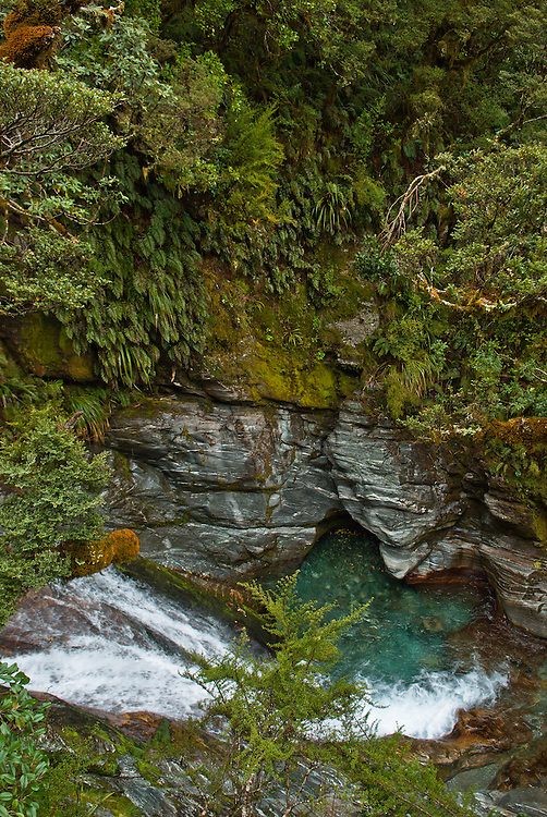 Tree branches and lush undergrowth overhang shist rockface and plunge pool, Roaring Burn, Milford Track, New Zealand