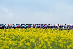 Peloton near Guiscard during the 2019 Paris-Roubaix (1.UWT) with 257 km racing from Compi&egrave;gne to Roubaix, France. 14th April 2019. Picture: Thomas van Bracht   Peloton Photos<br /> <br /> All photos usage must carry mandatory copyright credit (Peloton Photos   Thomas van Bracht)