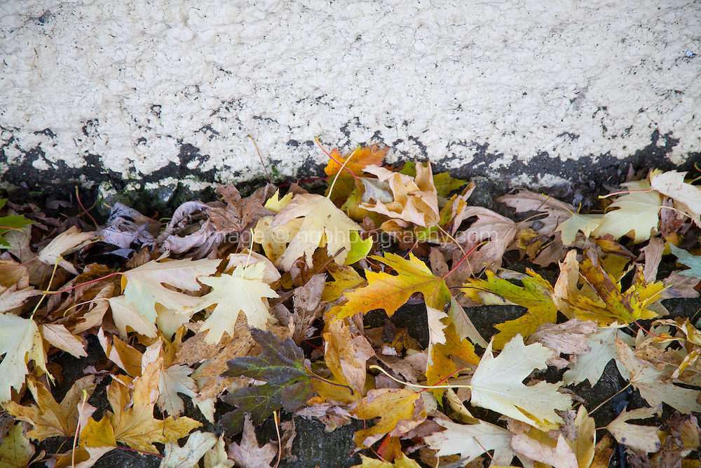 Close up of fallen leaves on a path against a wall in Dublin Ireland