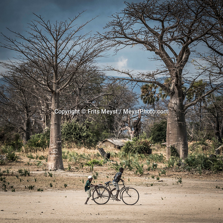 Malawi, July 2017. The land between Lake Malawi and Liwonde National park is strewn with Baobab trees and small farming villages. Malawi is known for its long rift valley and the third largest lake in Africa: Lake Malawi. Malawi is populated with friendly welcoming people, who gave it the name: the warm heart of Africa. In the south the lake make way for a landscape of valleys surrounded by spectacular mountain ranges. Photo by Frits Meyst / MeystPhoto.com