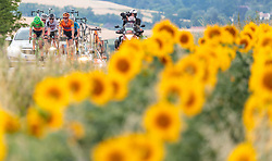 04.07.2017, Pöggstall, AUT, Ö-Tour, Österreich Radrundfahrt 2017, 2. Etappe von Wien nach Pöggstall (199,6km), im Bild Feature // Feature Sunflower field during the 2nd stage from Vienna to Pöggstall (199,6km) of 2017 Tour of Austria. Pöggstall, Austria on 2017/07/04. EXPA Pictures © 2017, PhotoCredit: EXPA/ JFK