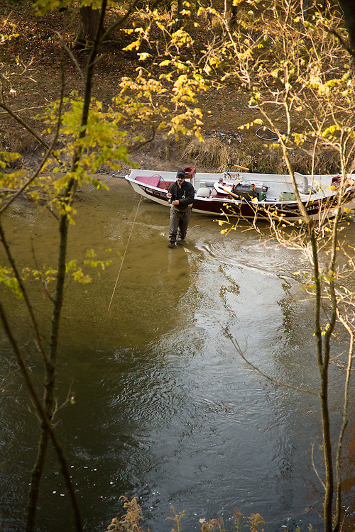 Fly fisherman casts to spawning King salmon on the Pere Marquette River in Michigan.