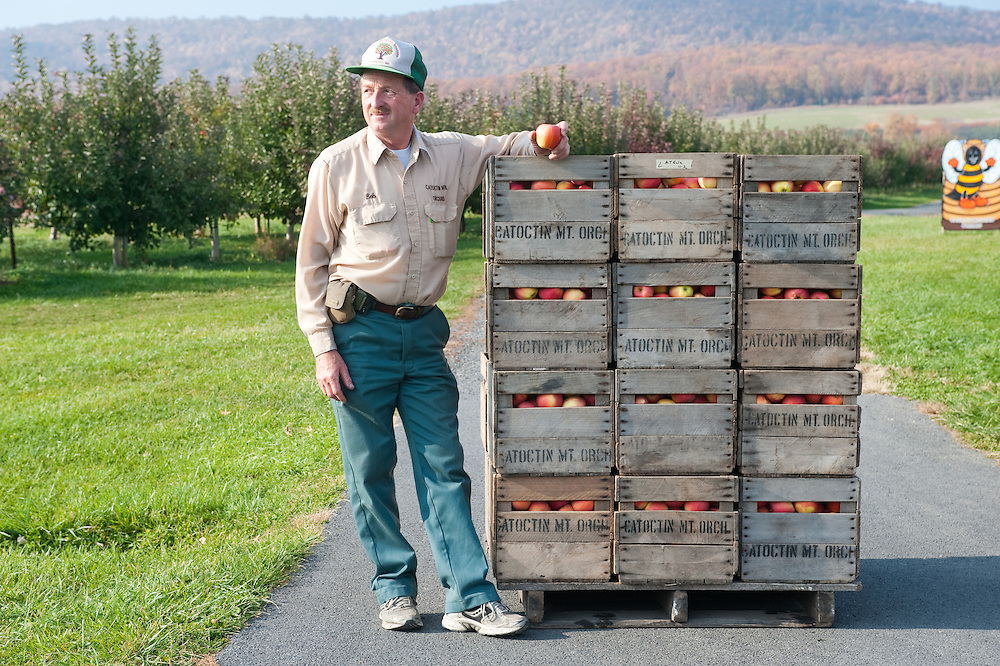 Orchard farmer with crates of apples