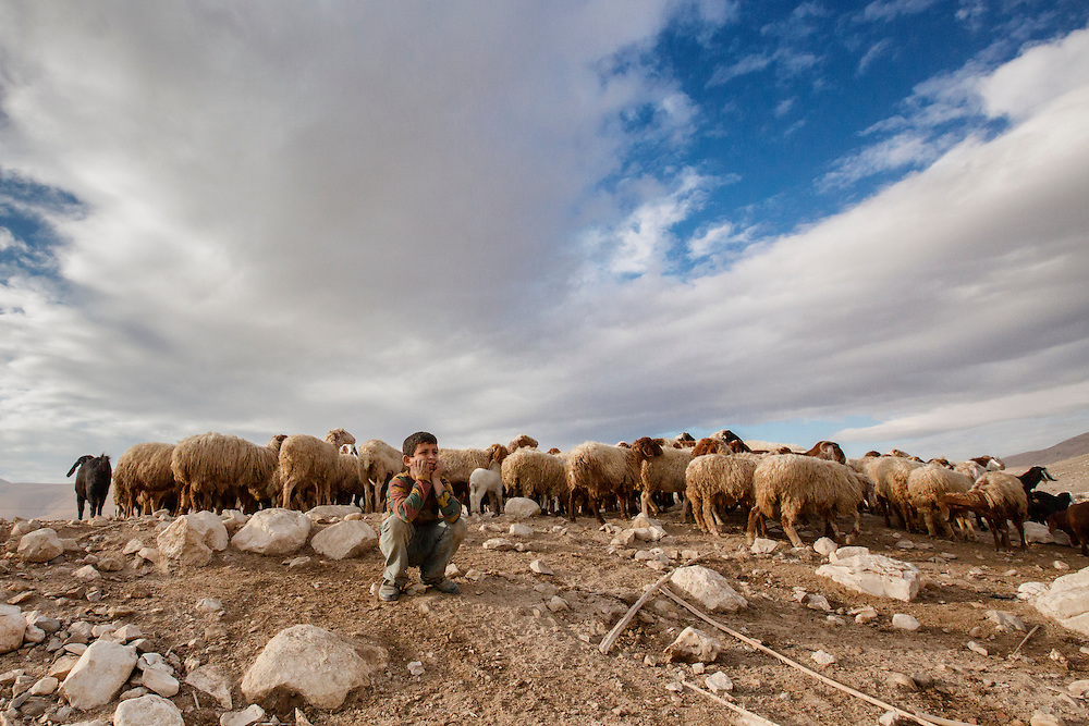 A boy keeps watch over his family's flock in Al Jiftlik. Dec. 10, 2013. West Bank, Palestinian Territories. (Photo by Gabriel Romero/Alexia Foundation ©2014)