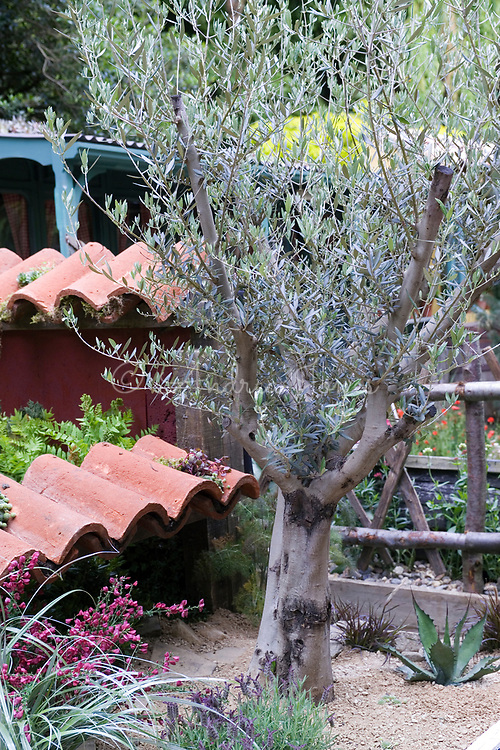 'Casa Forte'. Courtyard garden design by Stephen Firth & Nicola Ludlow-Monk  RHS Chelsea 2007.  Small Mediterranean courtyard garden. Terracotta roof tiles. Drought tolerant palnting ncluding Olea europea, Olive Tree, succulents, Agave & Lavandula. Rustic wooden fence with gravel.