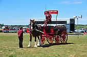Class 16 - Single Heavy Horse Turnout in Harness with Trade