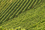 Vineyards, regular patterns. Black Forest, Germany