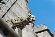 Wasserspeier Stiftskirche St. Waltrudis, Mons, Hennegau, Wallonie, Belgien, Europa   water spout, abbey church Saint Waltrude, Mons, Hennegau, Wallonie, Belgium, Europe