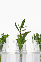 Plant seedlings in glasses