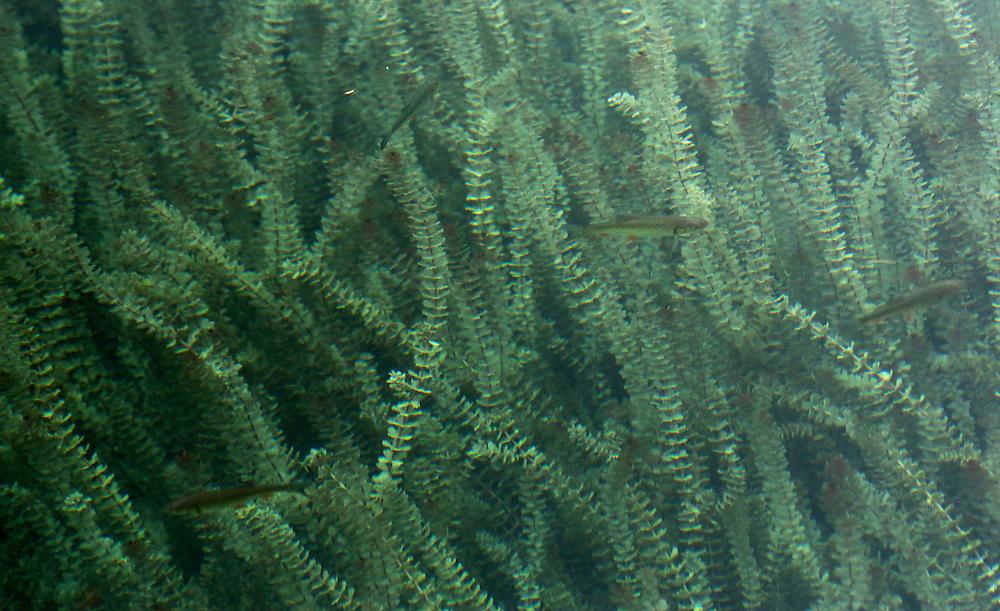Underwater plants at Plitvice Lakes, Croatia.