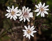 Floral Spotlights