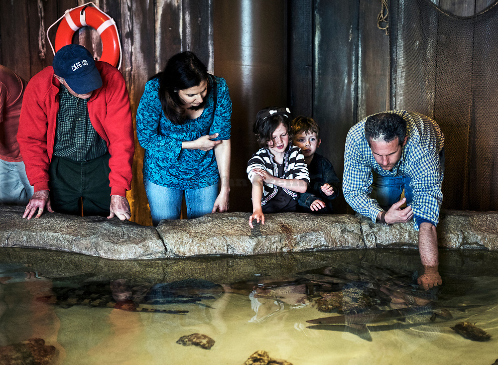 Shark petting tank, New Jersey State Aquarium, Camden, Jew Jersey
