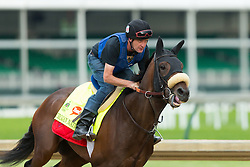 Derby 142 hopeful Trojan Nation was on the track for training, Wednesday, May 04, 2016 at Churchill Downs in Louisville.