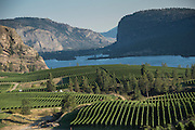 Aerial view over Blue Mountain Vineyards, Okanagan, British Columbia, Canada
