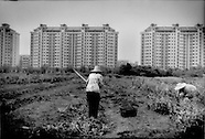 Asian Food Crisis: Vanishing Farmland