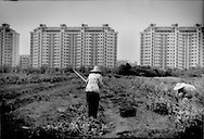 Women till soil on farmland being pinched on all sides by expanding development as Shanghai continues to expand, near Longyang Station, Pudong, Shanghai, China.