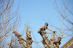 UK ENGLAND LONDON 26MAR12 - Tree surgeons at work pruning acorn trees in Shirland Road, Westminster, west London.....jre/Photo by Jiri Rezac....© Jiri Rezac 2012