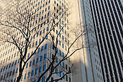 Silhouetted tree, Shinjuku