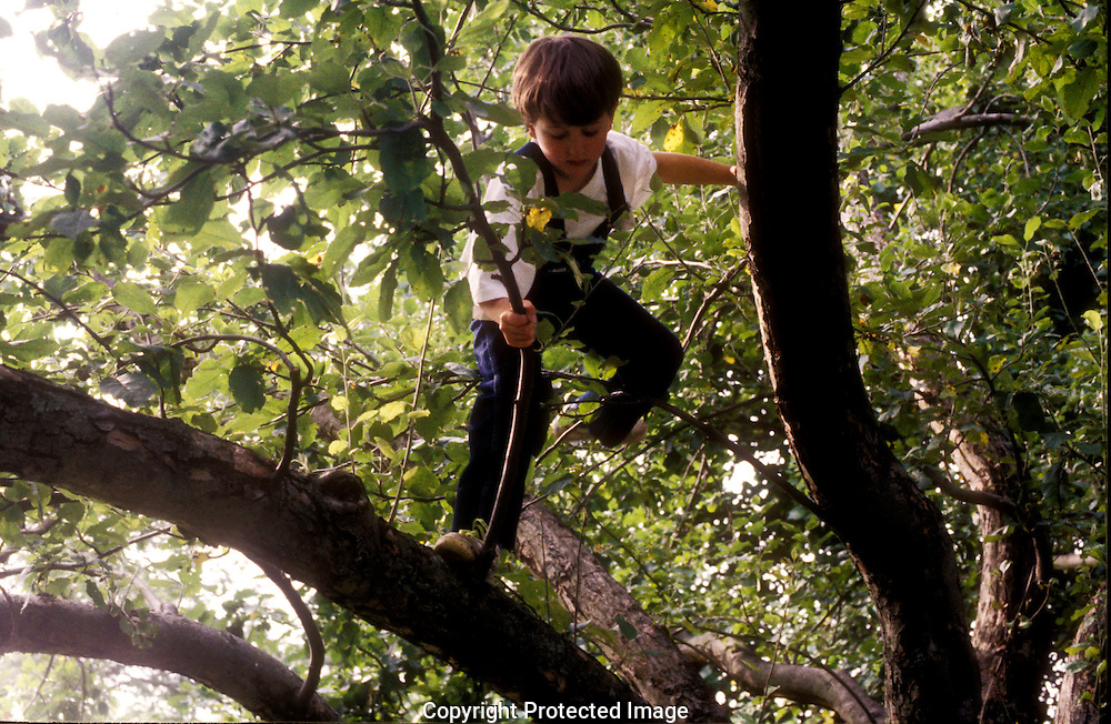 Young boy climbing in an apple tree.
