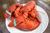 Fresh steamed Maine lobster ready to crack open and eat, Bar Harbor, Maine, USA.