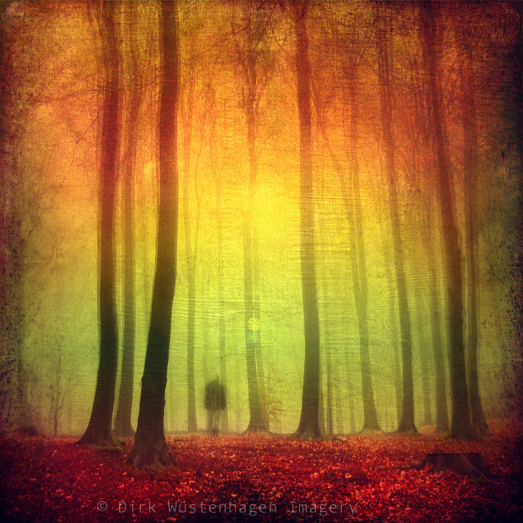 Colorful forest scene - manipulated and colored photograph<br /> Prints: http://society6.com/DirkWuestenhagenImagery/Color-Dream-467_Print