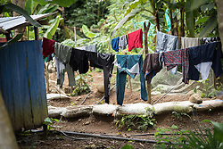 16 November 2018, San José de León, Mutatá, Antioquia, Colombia: Laundry hangs to dry. Following the 2016 peace treaty between FARC and the Colombian government, a group of ex-combatant families have purchased and now cultivate 36 hectares of land in the territory of San José de León, municipality of Mutatá in Antioquia, Colombia. A group of 27 families first purchased the lot of land in San José de León, moving in from nearby Córdoba to settle alongside the 50-or-so families of farmers already living in the area. Today, 50 ex-combatant families live in the emerging community, which hosts a small restaurant, various committees for community organization and development, and which cultivates the land through agriculture, poultry and fish farming. Though the community has come a long way, many challenges remain on the way towards peace and reconciliation. The two-year-old community, which does not yet have a name of its own, is located in the territory of San José de León in Urabá, northwest Colombia, a strategically important corridor for trade into Central America, with resulting drug trafficking and arms trade still keeping armed groups active in the area. Many ex-combatants face trauma and insecurity, and a lack of fulfilment by the Colombian government in transition of land ownership to FARC members makes the situation delicate. Through the project De la Guerra a la Paz ('From War to Peace'), the Evangelical Lutheran Church of Colombia accompanies three communities in the Antioquia region, offering support both to ex-combatants and to the communities they now live alongside, as they reintegrate into society. Supporting a total of more than 300 families, the project seeks to alleviate the risk of re-victimization, or relapse into violent conflict.