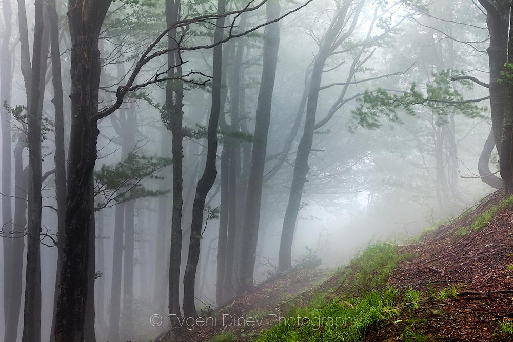 Kozya Stena Forest Reserve
