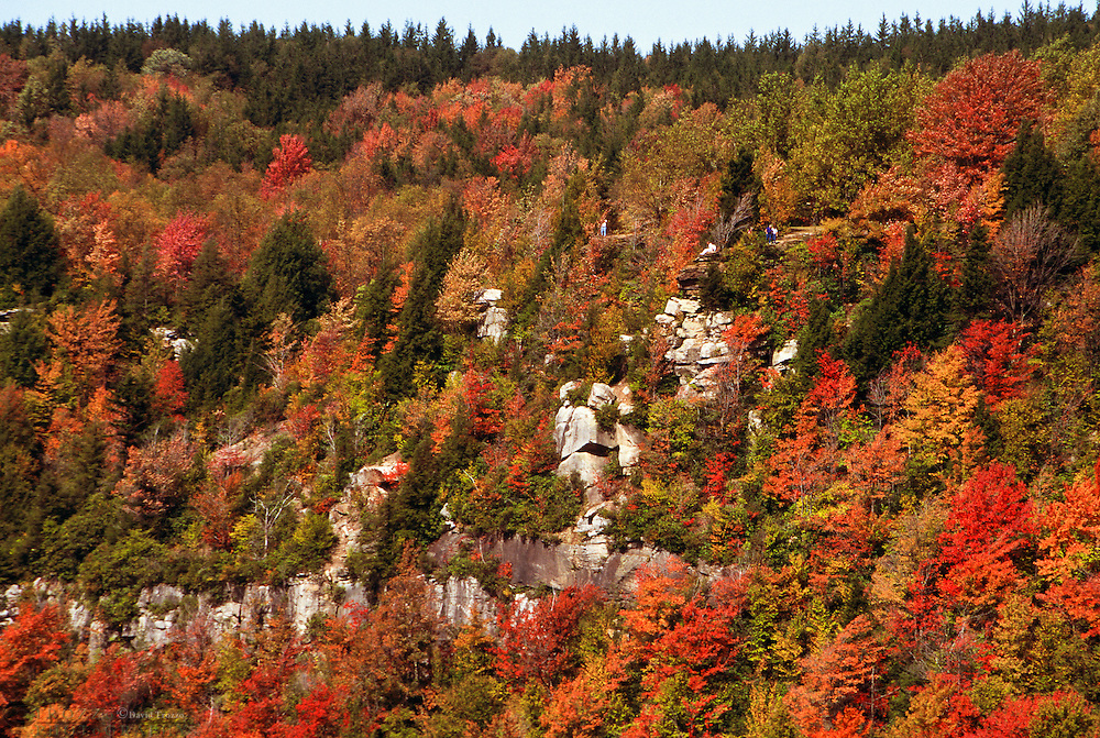 fall; foliage; west; virginia; aerial; autumn; blackwater; falls; environment; forest; landscape; ledge; mountain; mountainous; mountains; natural; nature; park; rock; scenic; terrain; view; woods; cliff; day; daylight; golden; green; north; america; outdoor; paradise; usa; vacation; vertical; color; colour; color; colour; us; usa; north; america; united; states; no; one; nobody; horizontal
