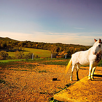 A horse standing in a field