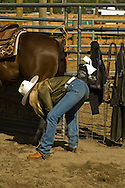 Cowgirl adjust leg wraps at cutting competition, Big Timber, Montana
