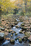 The Roaring Fork Motor Nature Trail crosses Roaring Fork stream here on the Tennessee side of Great Smoky Mountains National Park, in southeastern USA. The source of Roaring Fork is located nearly 5,000 feet (1,500 m) up along the northern slopes of Mount Le Conte, where several small springs converge. From its source, Roaring Fork drops 2,500 feet (760 m) over just two miles (3 km), spilling over Grotto Falls. The mouth of the Roaring Fork empties into the West Prong of the Little Pigeon River in Gatlinburg, TN. The Roaring Fork valley is underlain by Precambrian Class II sandstone of the Ocoee Supergroup, a rock formation formed from ancient ocean sediments nearly a billion years ago, as in most of the Smokies.