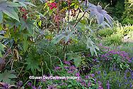 65821-00116 Castor Oil Plant (Ricinus communis), Summer Snapdragon (Angelonia Serena Purple), Pentas (Pentas lanceolata 'Graffiti Violet'), Chinese Silver Grass (Miscanthus sinensis 'Morning Light') in Terrace Garden,  Sarah P. Duke Gardens, Durham, NC