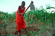 KENYA, MAASAI a young Maasai girl using a traditional farming tool to cultivate her field of corn