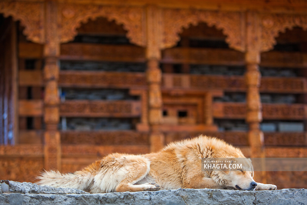 A dog sleeps in front of a Himalayan temple in Hatu, in Narkanda region of Himachal Pradesh, India