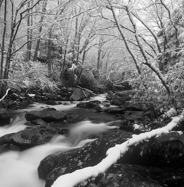 A late snowstorm covers the fresh spring growth alongside the Little Pigeon River, Great Smoky Mountains National Park, Tennessee.