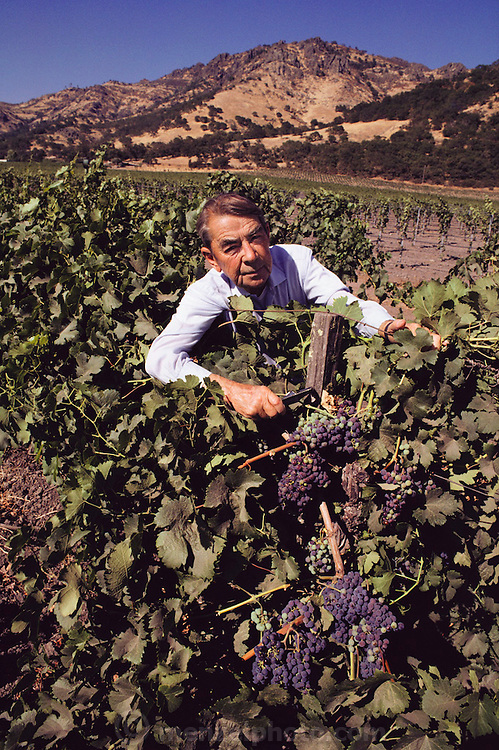 André Tchelistcheff (December 7, 1901 - April 5, 1994) was America's most influential post-Prohibition winemaker in the Napa Valley.  Photographed in 1986. MODEL RELEASED.