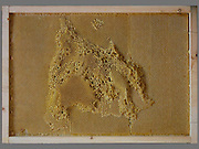 "Artist works with Bees To Create Beautiful maps of the the world using bees wax<br /> <br /> Ren Ri cooperated with bees to create art works"" Yuansu series"". Yuansu . Yuansu II, which is built on acrylic boxes, is the art work made when cooperating with bees.<br /> <br /> Ren Ri  said ""I change the gravity direction of the honeycomb every seven days by rotating the box. In the whole Yuansu series, I try to eliminate the absolute domination of the artist. Bees cooperating with artist can be seen as a relationship between human and nature'<br /> <br /> Photo shows: Map of Spain<br /> ©Ren Ri/Exclusivepix Media"