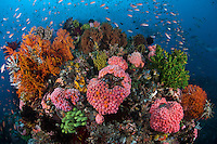 Profusion of Marine Life ..Shot in Indonesia