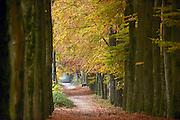 Nederland, Malden, 18-11-2013Rode, oranje en gele tinten in het bos in de herfst.Een mooie laan met bomen, bomenlaan.Foto: Flip Franssen/Hollandse Hoogte
