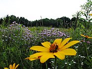 2004 - Aullwood Center, Mrs Aull's Garden, and Aullwood MetroPark