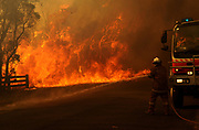 A member of the NSW Rural Fire Service battles a blaze in the town of Londonderry, in the outer western suburbs of Sydney, Australia.