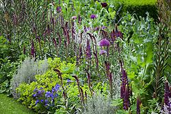 Lysimachia atropurpurea 'Beaujolais', Ozothamnus rosmarinifolius 'Silver Jubilee', Alchemilla mollis. RHS Chelsea Flower Show 2016, The Husqvarna Garden,  Designer: Charlie Albone
