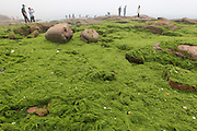 QINGDAO, CHINA - JUNE 17: (CHINA OUT) <br /> <br /> Seaweed Covered The Beach In Qingdao,China<br /> <br /> A general view of a beach covered in seaweed on June 17, 2013 in Qingdao, Shandong province of China. The seaweed, named enteromorpha prolifera grow quickly due to marine water eutrophication and warm weather following the ocean current that gather at the coastlines of Qingdao and the neighboring cities in recent days.<br /> ©Exclusivepix